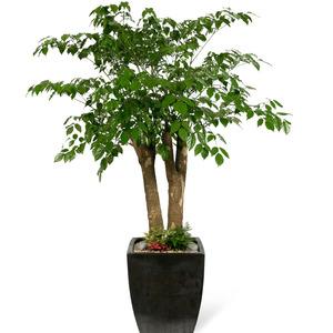 행복나무 특품